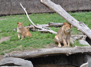 Coupons pour le zoo granby
